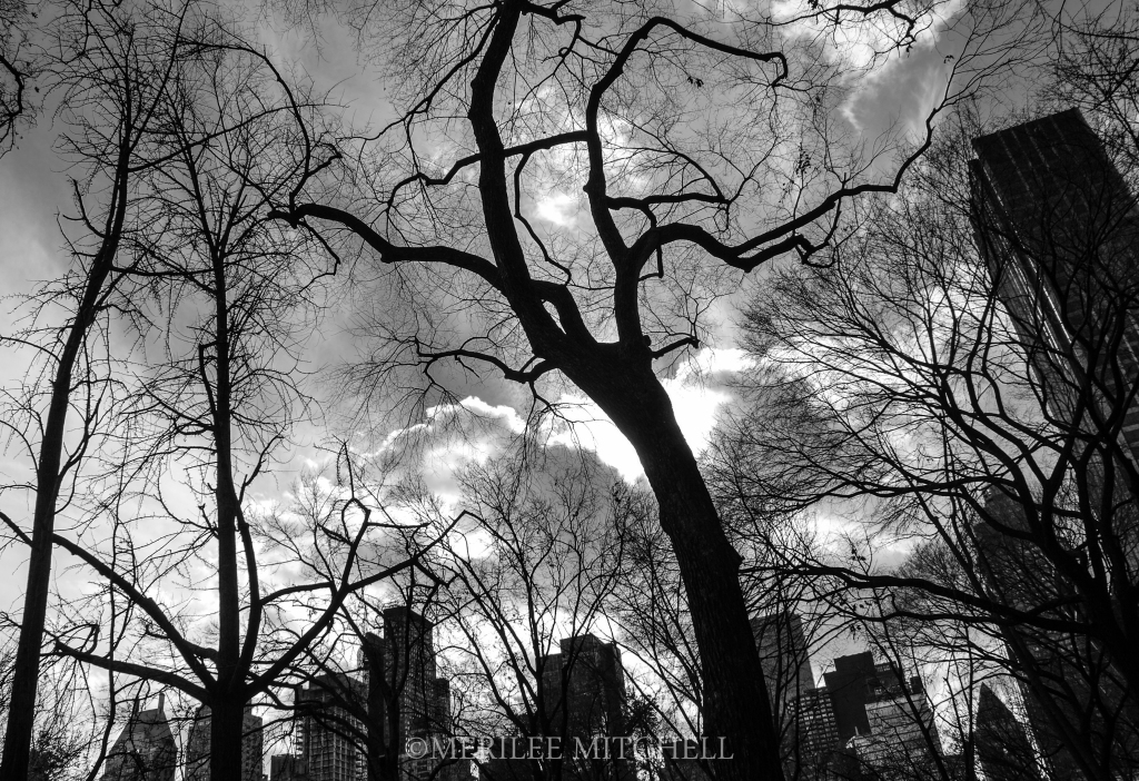 Black Trees. Copyright Merilee Mitchell