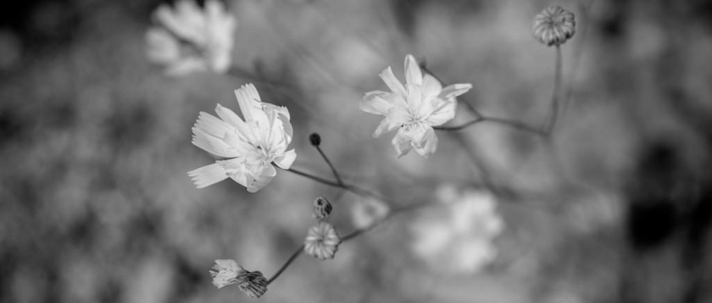 cropped-gravel-ghost-5-copyright-merilee-mitchell.jpg