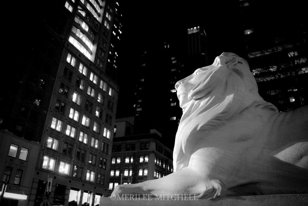 Lion. Copyright Merilee Mitchell