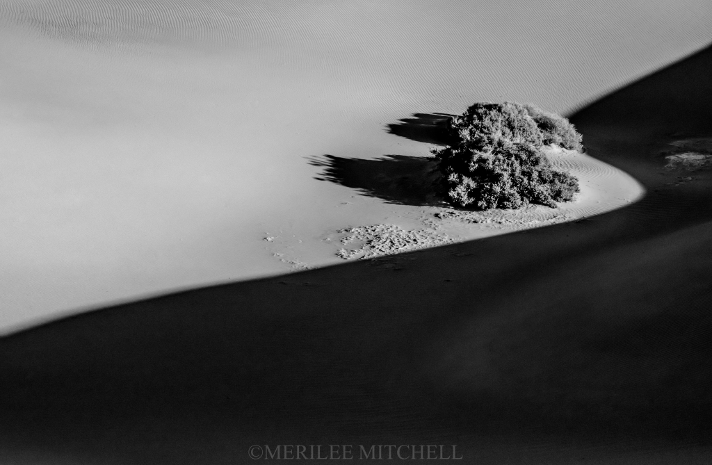 Sinuous 2. Copyright Merilee Mitchell