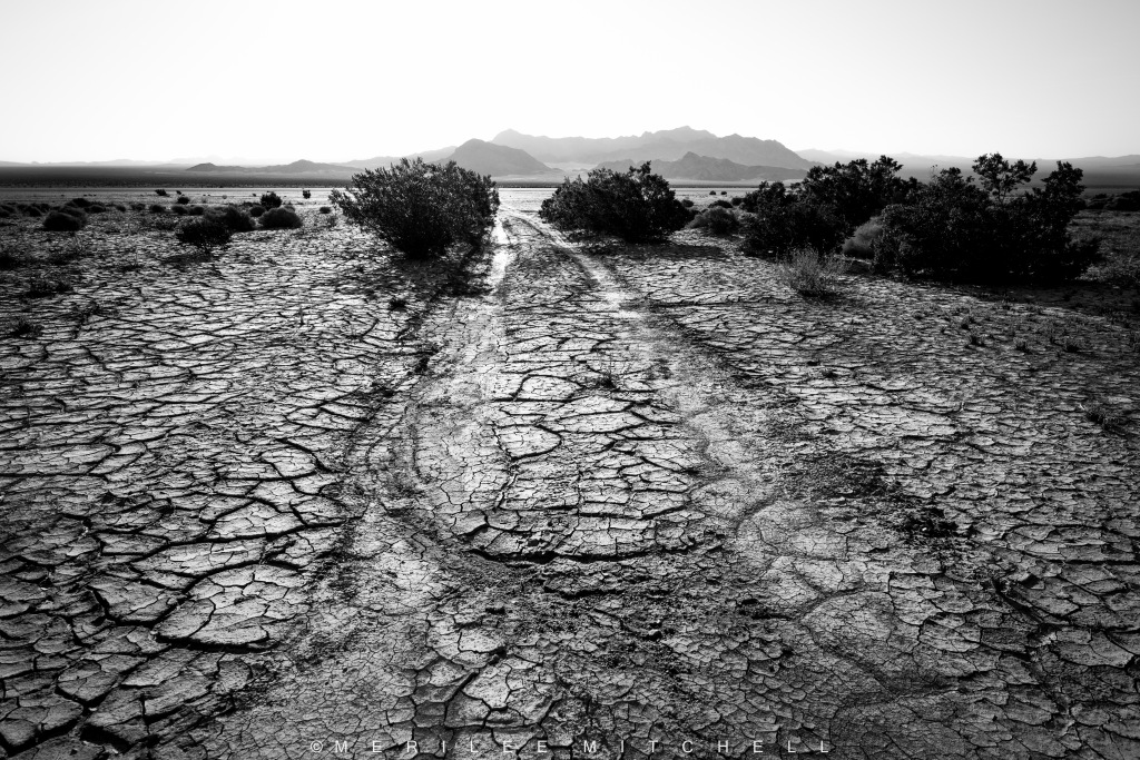 Dry Lake Tracks. Copyright Merilee Mitchell