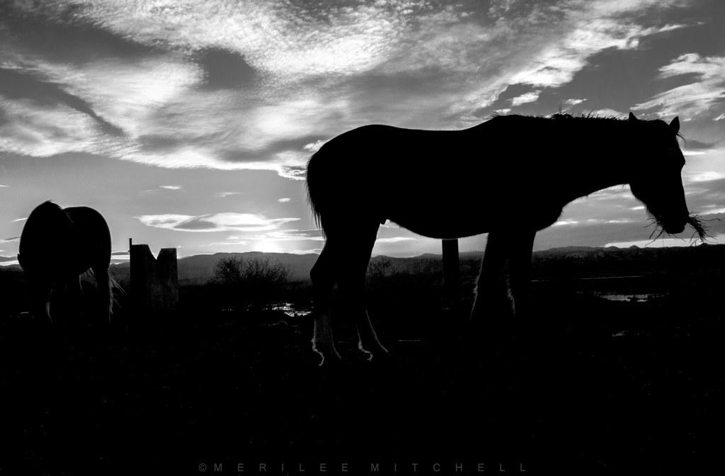 Silhouette 3. Copyright Merilee Mitchell