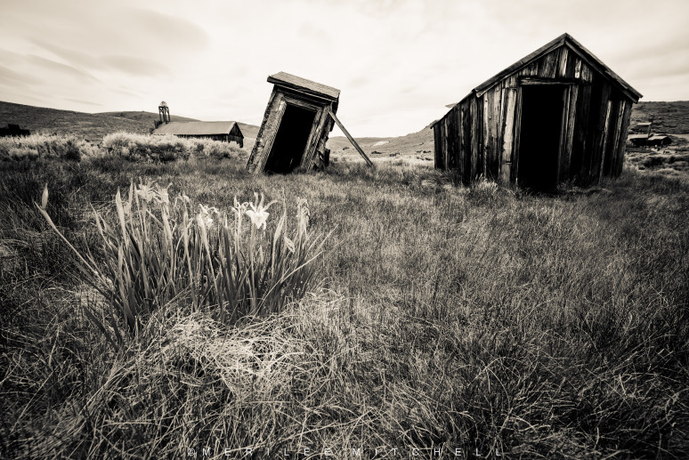 Leaning Outhouse.  Copyright Merilee Mitchell