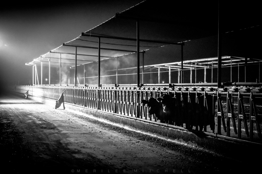 Dairy At Night 2. Copyright Merilee Mitchell