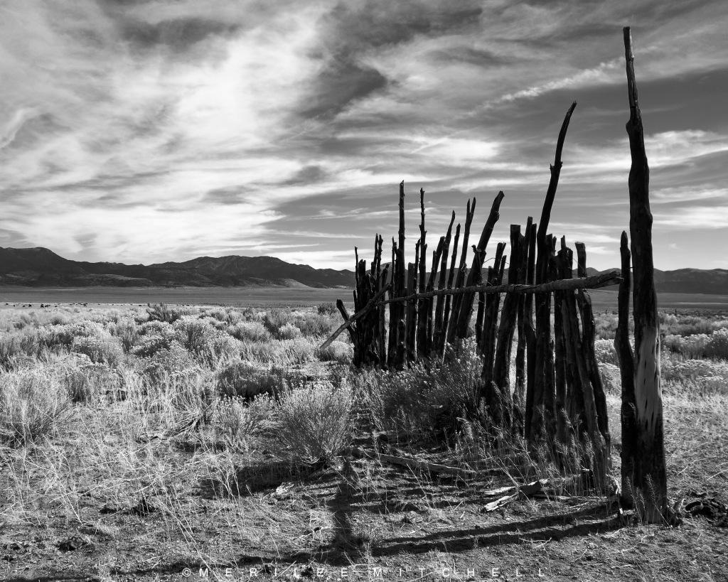 Ranch View. Copyright Merilee Mitchell