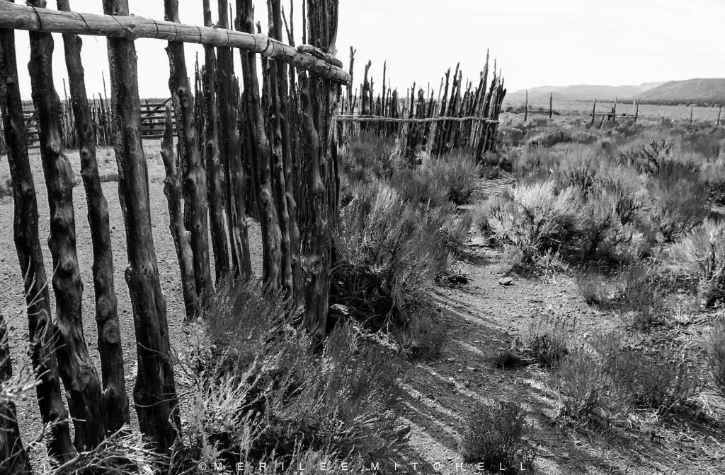 Tree Fence 2. Copyright Merilee Mitchell