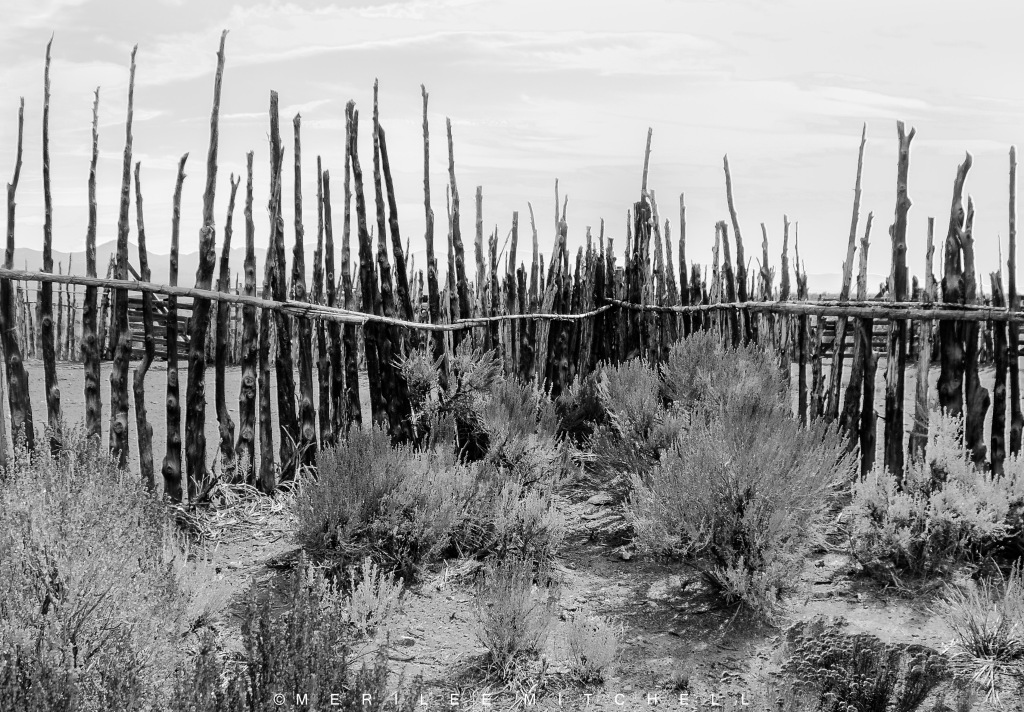 Tree Fence 3. Copyright Merilee Mitchell