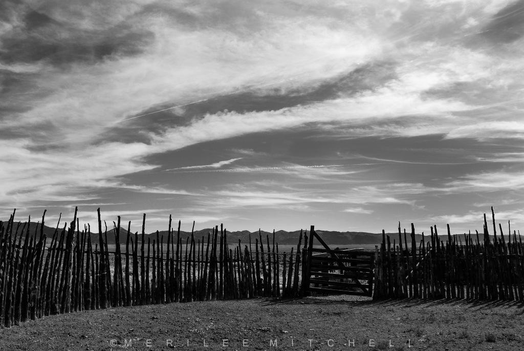 Tree Fence. Copyright Merilee Mitchell