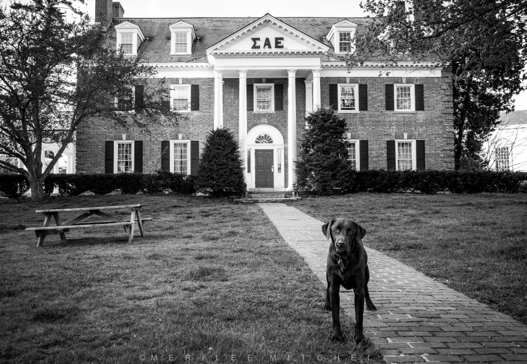 Frat Dog 2.  Copyright Merilee Mitchell