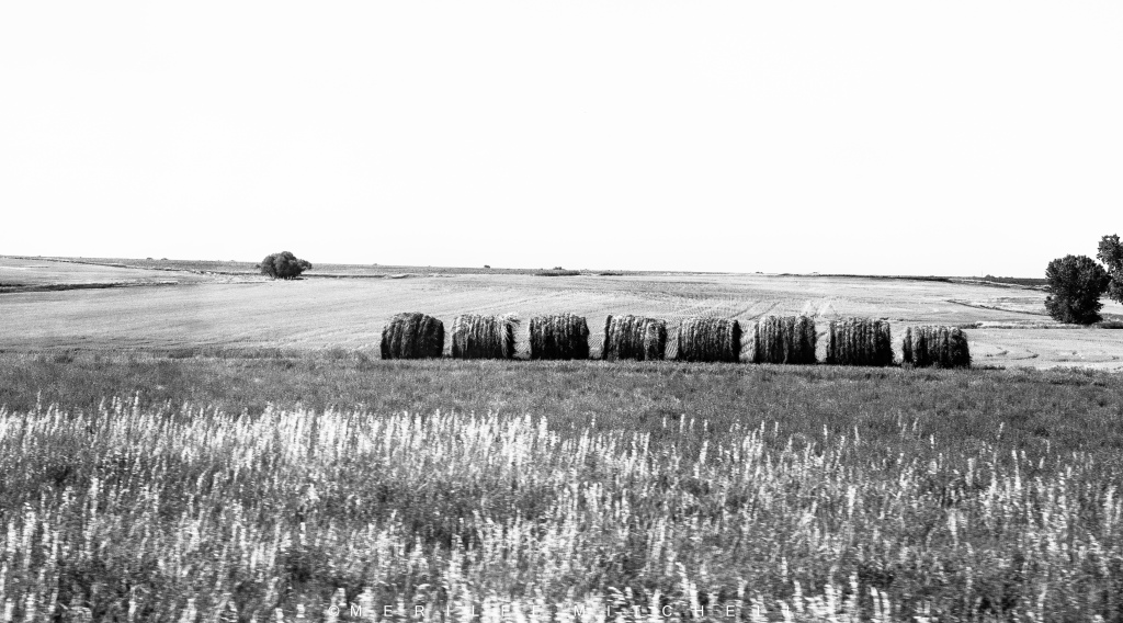Rolled Hay. Copyright Merilee Mitchell-5