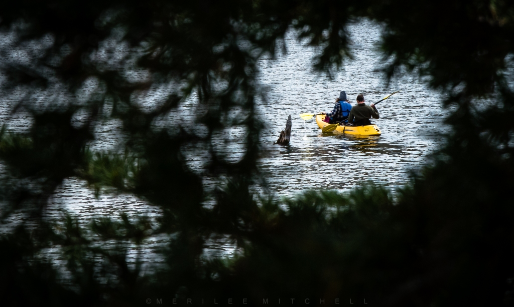 Kayak. Copyright Merilee Mitchell-2