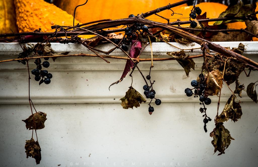 autumn-still-life-copyright-merilee-mitchell-2