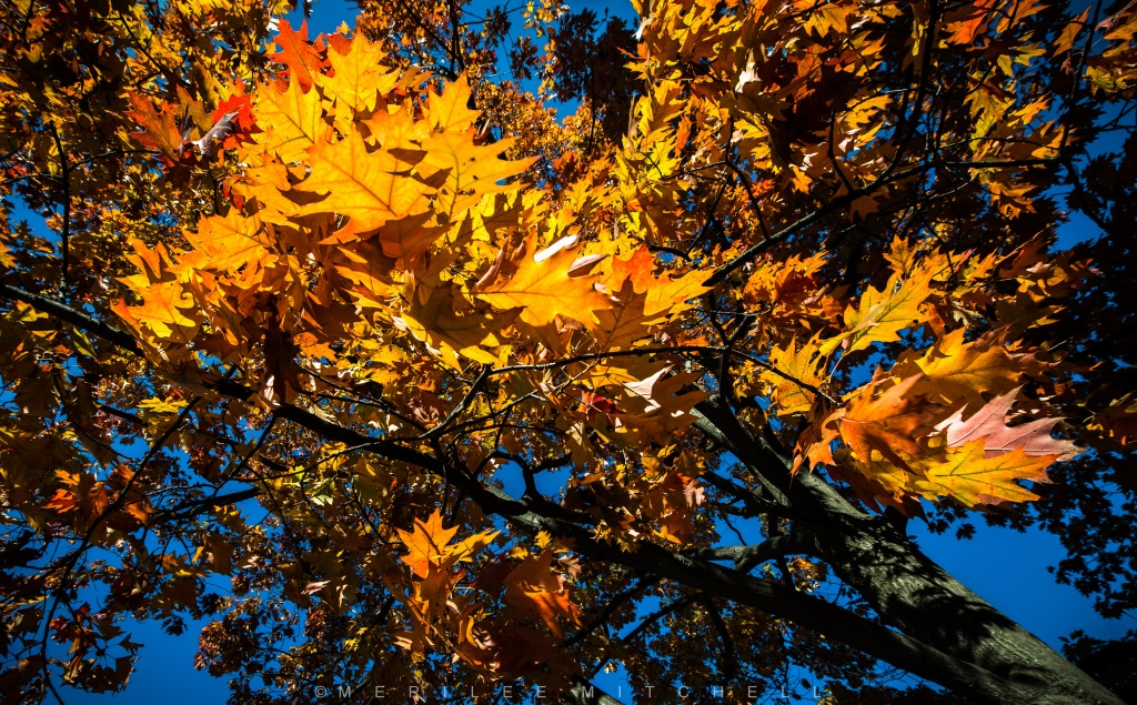 fall-explosion-copyright-merilee-mitchell