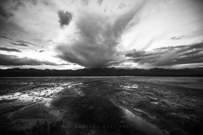 Salty Wet. Copyright Merilee Mitchell 2021