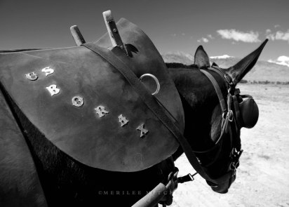 US Borax. Copyright Merilee Mitchell 2011